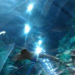 IMAG0599_large.jpg