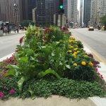 Foto de North Michigan Avenue