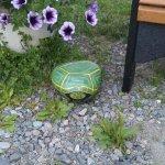 Lapland Lake Nordic Vacation Center Foto