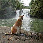 Khlong Chao Waterfalls Foto