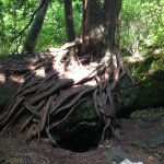 Bruce's Caves Conservation Area Foto