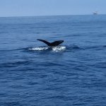 Whales are fast so have your camera ready.  There is a lot of life in the Channel Islands.