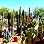Hacienda Del Sol Tucson Entry