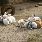 Help the rabbit lady count her bunnies!