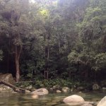 Daintree Discovery Tours Foto