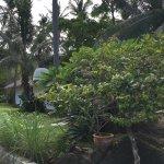 Jungle Club Foto