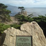 The Lone Cypress.. one of CA's most enduring landmarks. It's been there for 250 years. The symbo
