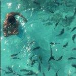 fish_large.jpg