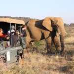 A close encounter with an elephant