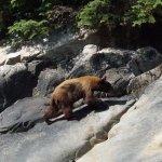 Bear (Tracy Arm Fjord)