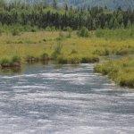 Eagle River Nature Center Rodak Nature Trail