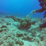 Reef Pirates Diving Foto