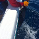 Foto de Baja Pirates Fishing Fleet