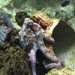 la pieuvre caméléon