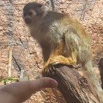 Photo de Monkey Park