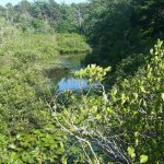Photo de Wellfleet Bay Wildlife Sanctuary