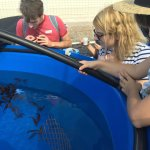 My daughter observing seahorses