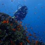 Kinasi diving