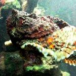 Photo of Shaab Abu Ramada/The Aquarium