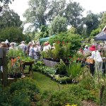 Plant (and cake) sales at the lovely Fuller's Mill Gardens