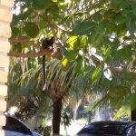 Micos na área verde dos Chalés