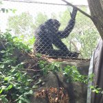Chattanooga Zoo Foto