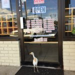 Locals flock here for quick, fresh sushi