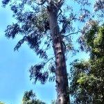 Foto de Marechal Carmona Park
