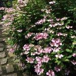 Bilde fra Jardin Agapanthe
