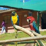 Foto de Ccochahuasi Animal Sanctuary