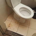Vomit around toilet in morning before we left for auschwitz. Came back over 12hours later and it