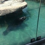 Zoologico de San Juan de Aragon Foto