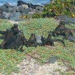 Galapagos Beach at Tortuga Bay Foto