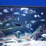 One of the many aquariums