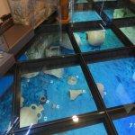 The glass floor showing Roman artefacts