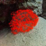 Foto di Red Sea Diving College