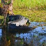 Foto di Mercure Kakadu Crocodile Hotel