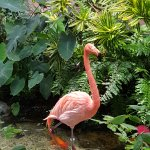 One of the 2 flamingos!