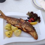 Whitefish from lake Attersee