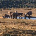 Foto de Gorah Elephant Camp