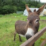 Eppie, the friendly donkey!