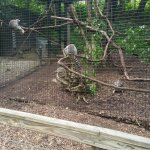 Oglebay Park Good Zoo
