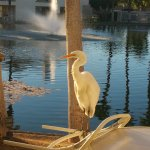 Heron on our patio in the morning...
