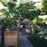 Entry, dogwoods in bloom, fence at left encloses outdoor dining area.
