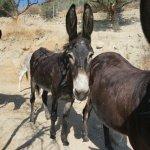 Walk With Donkeys