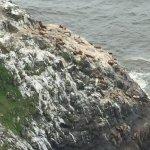 Sea Lion Caves Foto