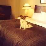 Pet friendly, comfortable rooms