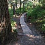 Part of Winner Creek Trail
