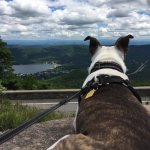 Puppy made it all the way up to enjoy the beautiful view.