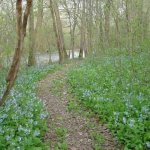 A springtime walk by the river will excite your senses, enjoy the aromatic bluebell's in full bl